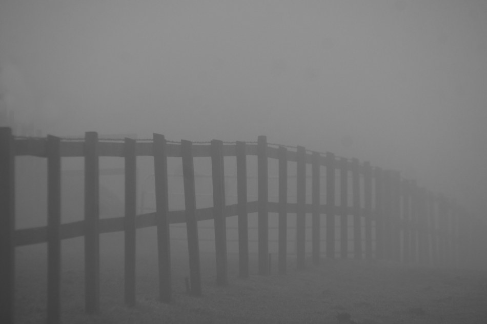 #359 - Fencing the grey 08-03-13