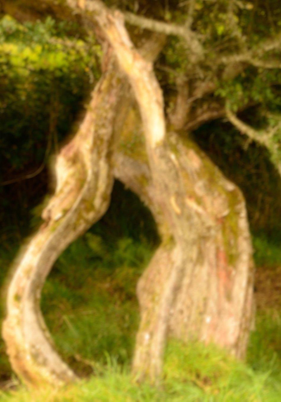 Impression of a tree