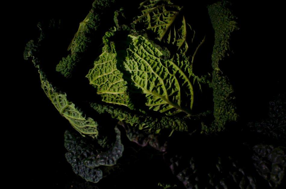 #65 - Brassica (05-03-15)