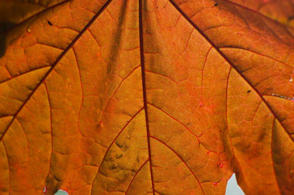 #145 - Leaf (24-05-16)