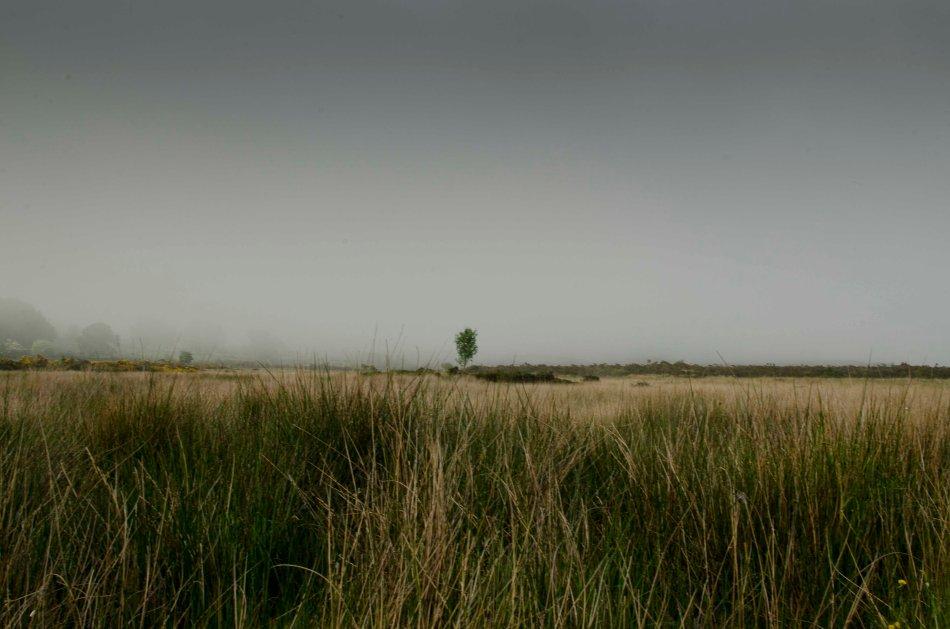 #160 - Bog reeds (08-06-16)