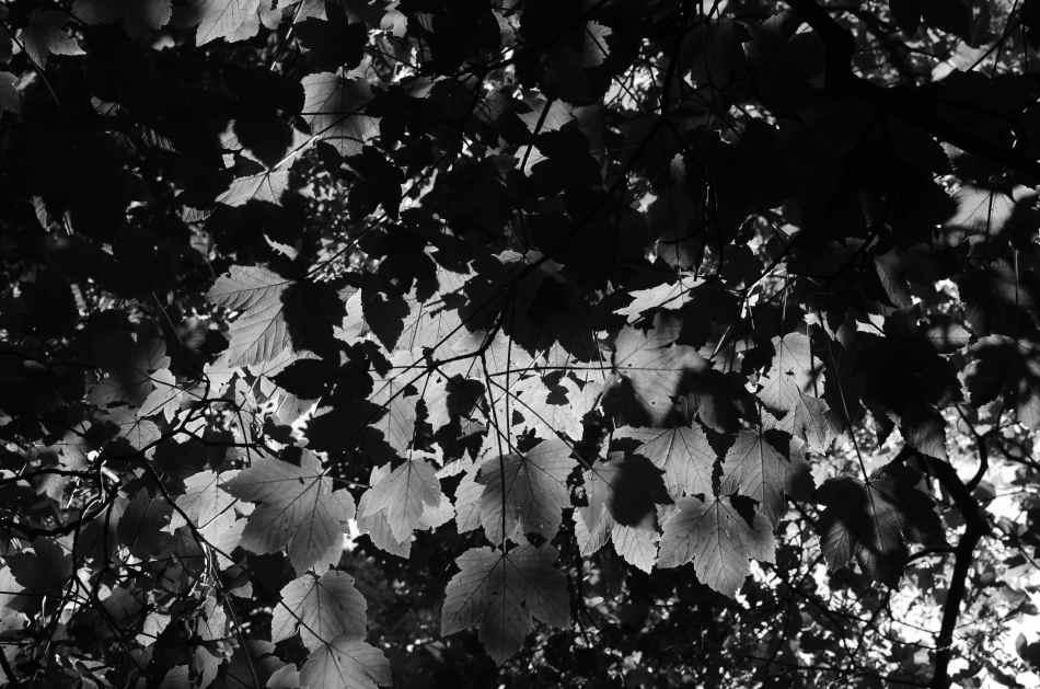 #194 - Canopy light (12-07-16)