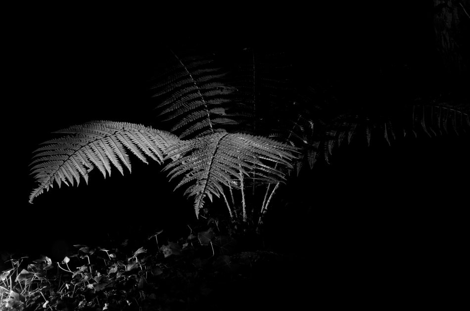 #203 - Fern in a gully (21-07-16)